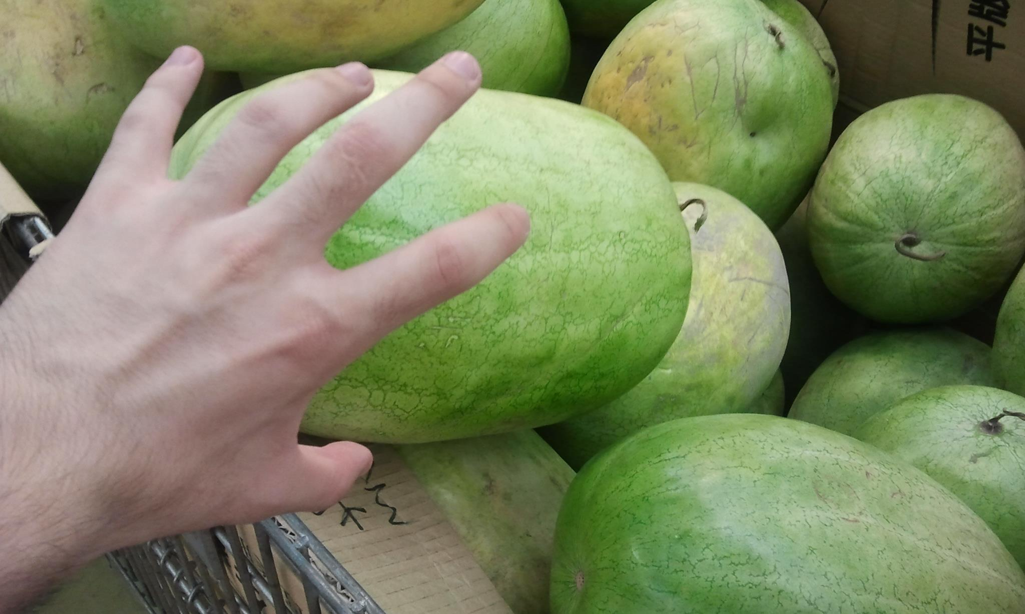large watermelon aspect ratio human hand
