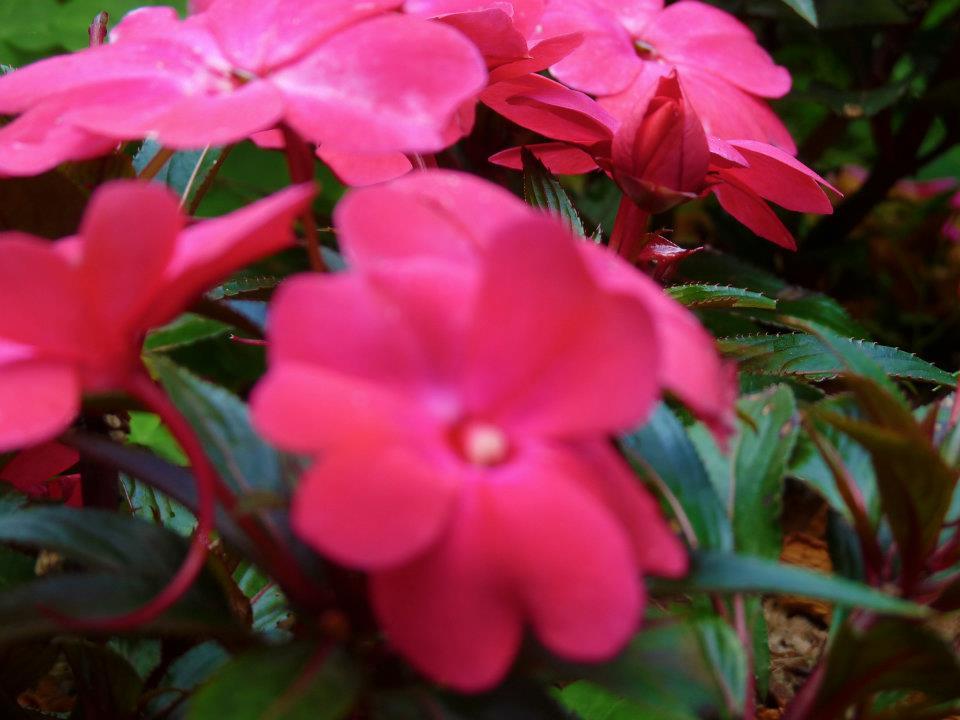 Macro flower close up